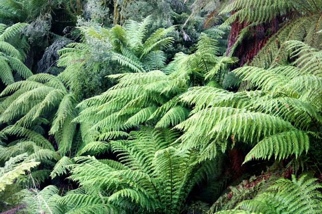 15 Tanaman Ini Sudah Hidup di Bumi Sejak Zaman Dinosaurus (95563)