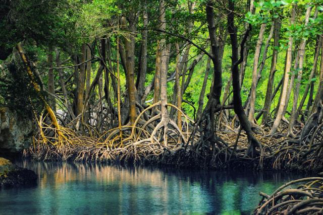 Pengelolaan Wilayah Hutan Bakau di Pesisir Laut dengan Penginderaan Jauh (99550)