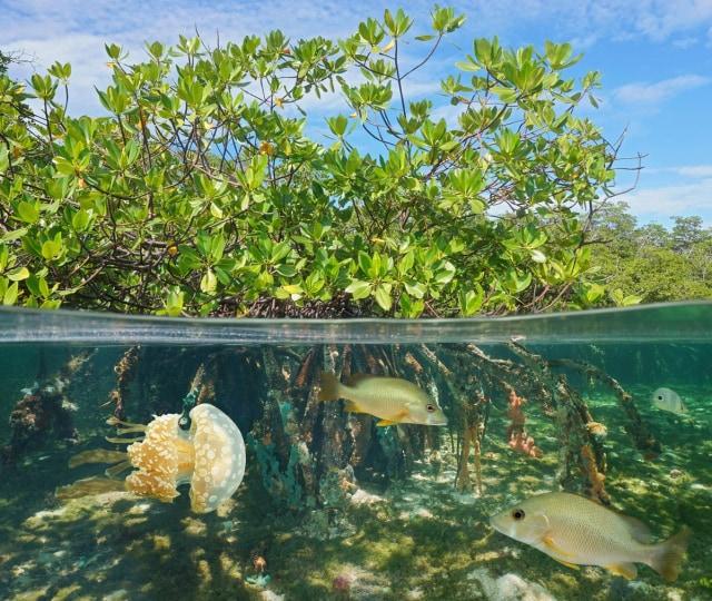 Pengelolaan Wilayah Hutan Bakau di Pesisir Laut dengan Penginderaan Jauh (99551)