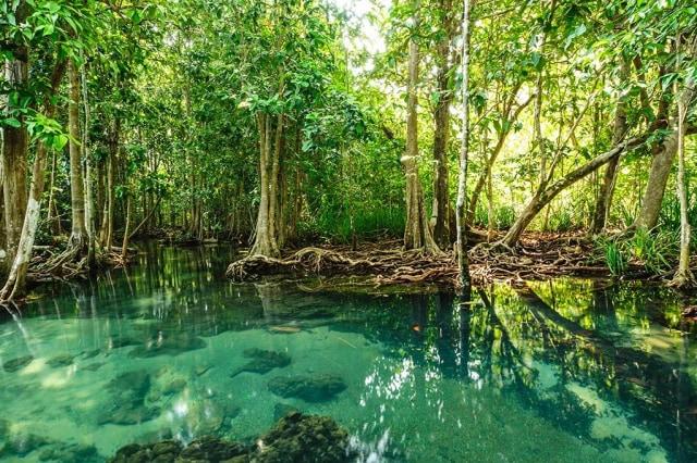 Pengelolaan Wilayah Hutan Bakau di Pesisir Laut dengan Penginderaan Jauh (99553)