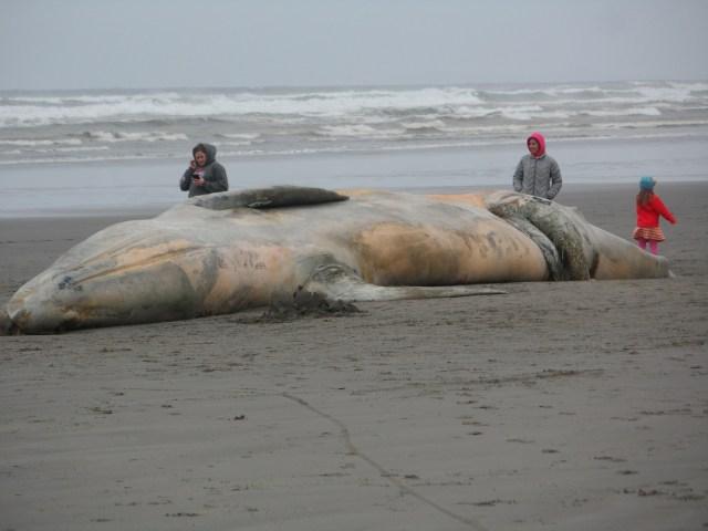 Tiap Tahun 2000 Paus dan Lumba-lumba Terdampar di Pantai, Bagaimana Bisa? (98119)