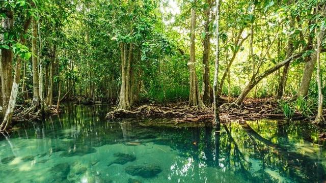 Pengelolaan Wilayah Hutan Bakau di Pesisir Laut dengan Penginderaan Jauh (99549)