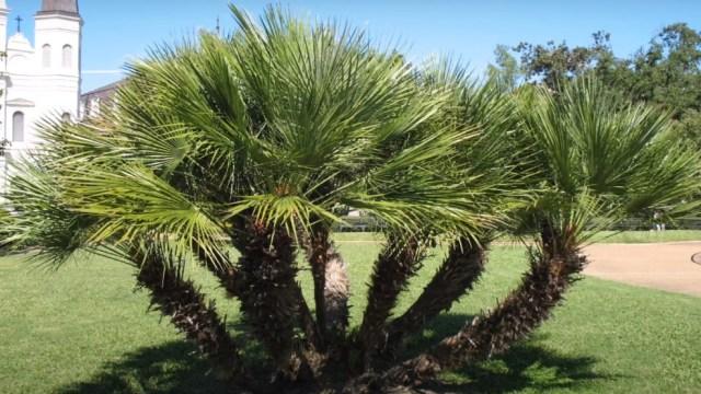 Punya Taman Kecil? 5 Pohon Ini Cocok untuk Menghiasi Halaman Rumah (29645)