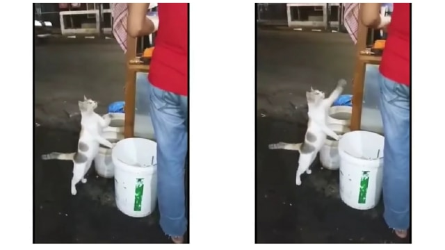 Video Kucing Seolah Minta Makan Ini Bikin Netizen Terharu dan Sedih (21280)