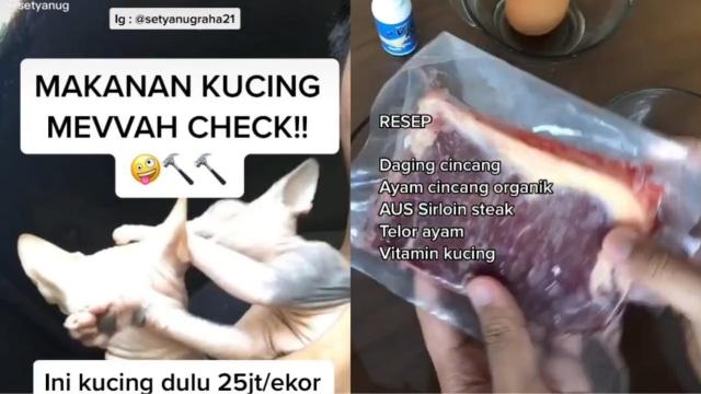 Viral Kucing Sultan, Dapat Makan Daging Sirloin Tiap Hari (8562)
