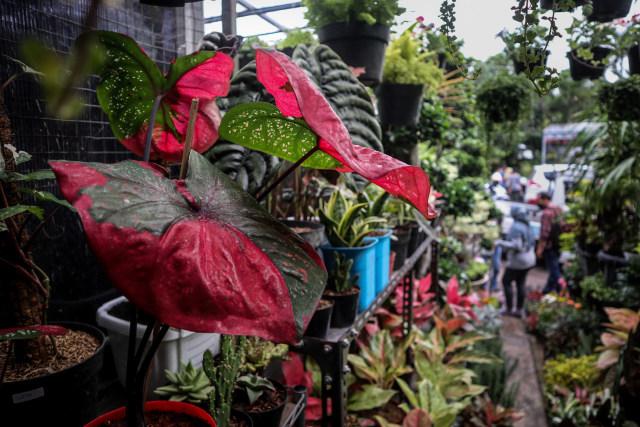 Foto: Segarnya Bisnis Bunga Hias saat Pandemi (7053)