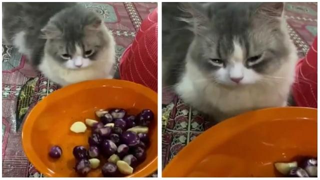 Kucing Ini Menangis saat Majikannya Mengupas Bawang, Lucu Tapi Kasihan (131136)
