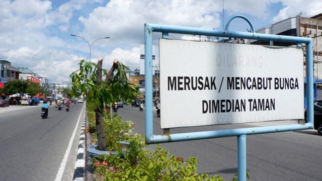 Di Pekanbaru, Pohon Pelindung Puluhan Tahun Dipotong Diganti Papan Reklame (344909)
