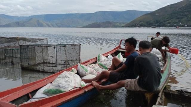 Hindari Bau Busuk, 109 Ton Ikan di Danau Toba yang Mati Mendadak Dikubur (30093)