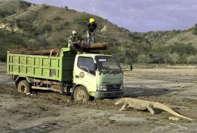 Jurassic Park versus Komodo Bercermin pada Kasus Serigala Liar di Colorado, AS (50189)