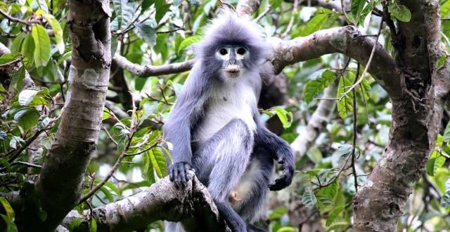 Spesies Baru Monyet Ditemukan, Langsung Dapat Status Hewan Langka (15535)