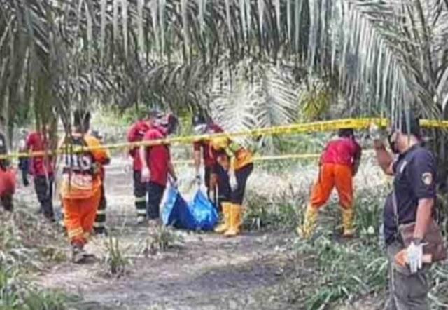 Mayat Sopir Truck Asal Kalsel Ditemukan di Kebun Sawit di Kalimantan Tengah (19963)