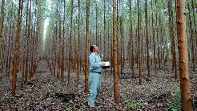 Jaga Produksi, Toba Pulp Bisa Hasilkan 2,6 Juta Bibit Eucalyptus per Bulan (10716)