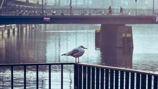 Pandemi Membuat Burung Mendengar Nyanyian Satu Sama Lain (60494)