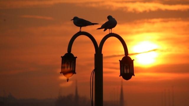 Pandemi Membuat Burung Mendengar Nyanyian Satu Sama Lain (60495)