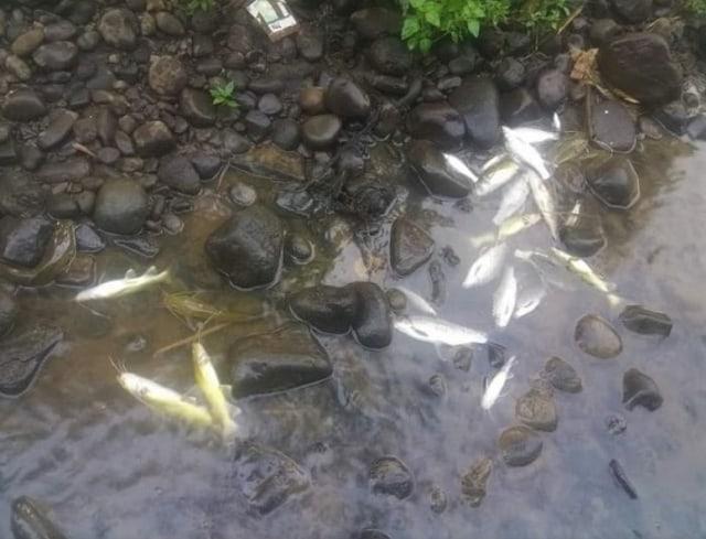 Ratusan Ikan Mati, Diduga Akibat Sungai Elo di Temanggung Tercemar Limbah (367267)