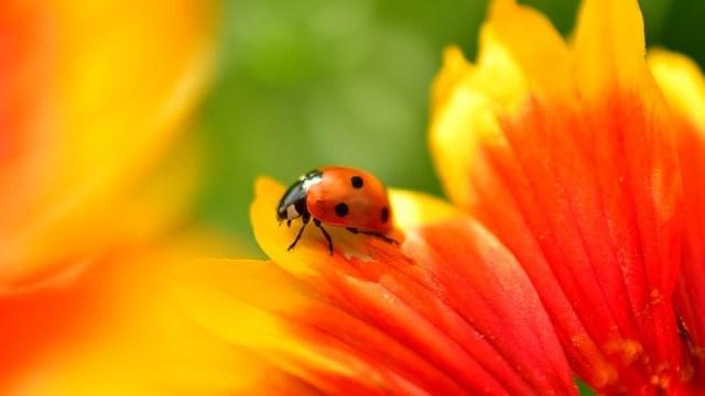 5 Hewan Paling Sibuk di Musim Gugur (371516)