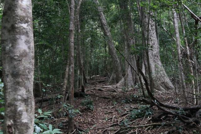 Kawinda To'i: Pesona dan Kisah Bagian Utara Jalur Pendakian Gunung Tambora (18843)