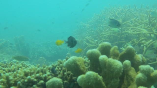 Pesona Mutiara Khatulistiwa CAL Kepulauan Karimata Sebagai 'Citizen Science' (359343)