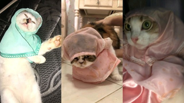 Viral Hijab untuk Kucing Dijual di Online Shop, Netizen: Halo Ukhti (657960)