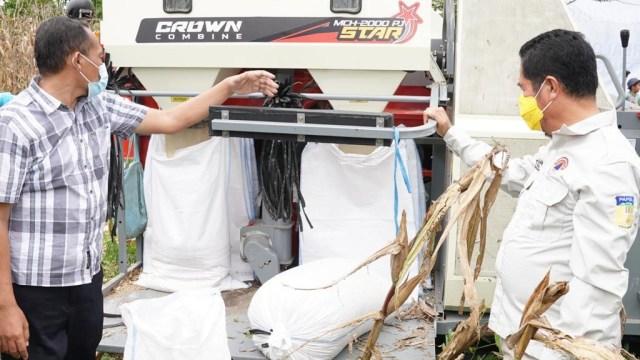 Jagung Kering Asal Keerom Papua Tembus Pasar Antarprovinsi (45696)