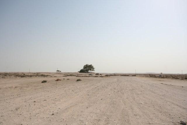 Pohon 'Physical Distancing' Itu Menyendiri di Bahrain (40659)