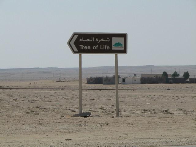Pohon 'Physical Distancing' Itu Menyendiri di Bahrain (40660)
