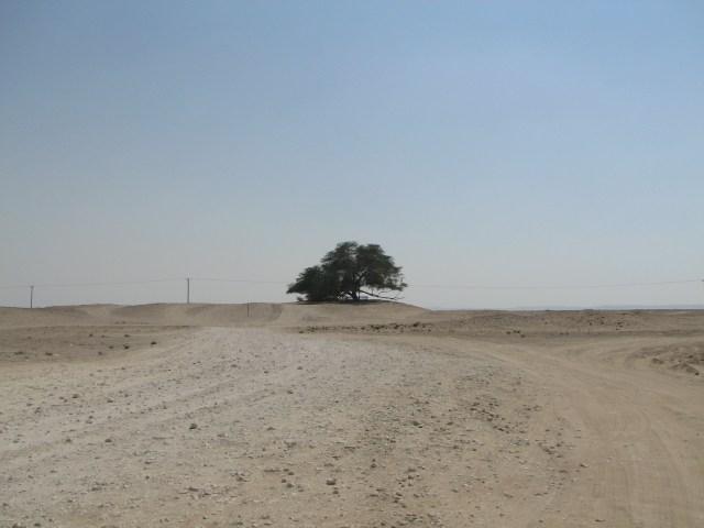 Pohon 'Physical Distancing' Itu Menyendiri di Bahrain (40662)