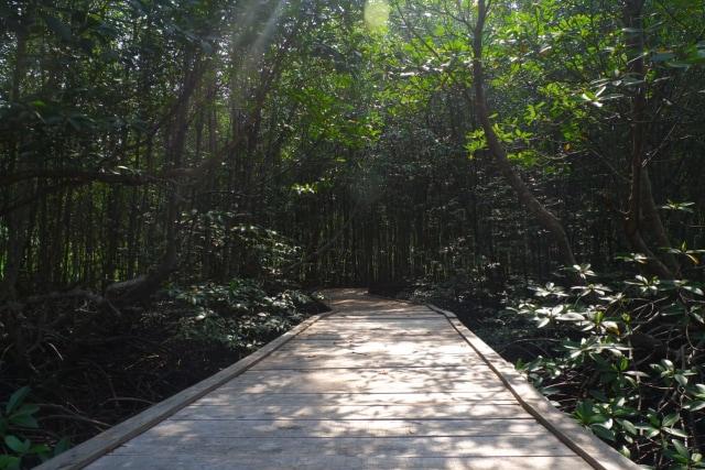Menikmati Wisata Sensasi Forest Healing di Hutan Mangrove Petengoran, Pesawaran (42960)