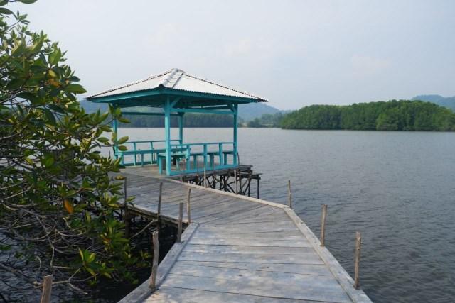 Menikmati Wisata Sensasi Forest Healing di Hutan Mangrove Petengoran, Pesawaran (42963)