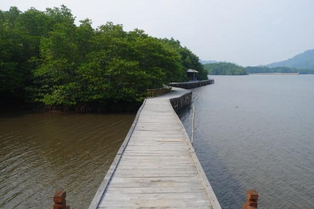 Menikmati Wisata Sensasi Forest Healing di Hutan Mangrove Petengoran, Pesawaran (42964)