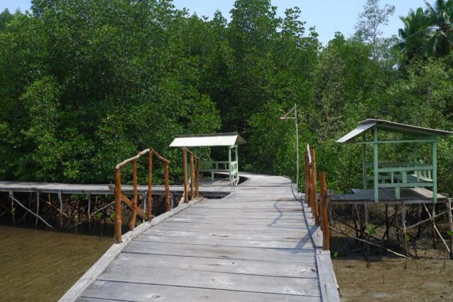 Menikmati Wisata Sensasi Forest Healing di Hutan Mangrove Petengoran, Pesawaran (42966)
