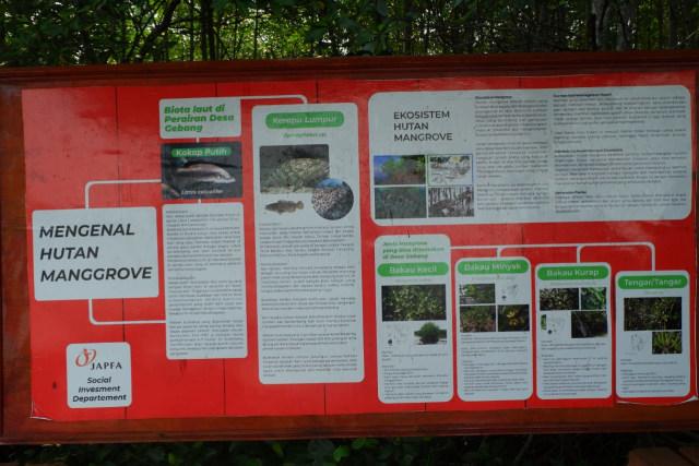 Menikmati Wisata Sensasi Forest Healing di Hutan Mangrove Petengoran, Pesawaran (42962)