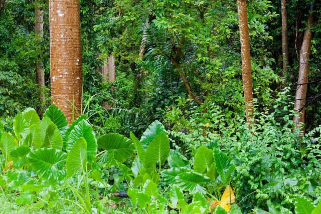Penelitian Terbaru: Beberapa Hutan Tropis Tangguh terhadap Perubahan Iklim (52433)