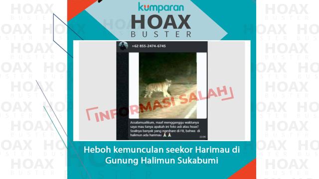 Hoaxbuster: Heboh Kemunculan Seekor Harimau di Gunung Halimun Sukabumi (48058)