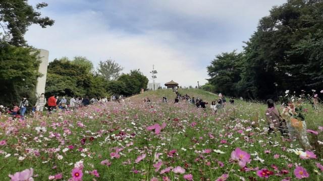 Foto: Pesona Ladang Bunga Olimpic Park, Populer di Korea Selatan (44397)