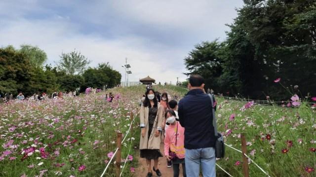 Foto: Pesona Ladang Bunga Olimpic Park, Populer di Korea Selatan (44398)