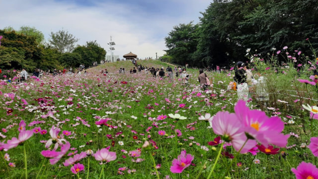 Foto: Pesona Ladang Bunga Olimpic Park, Populer di Korea Selatan (44399)