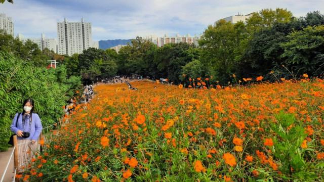Foto: Pesona Ladang Bunga Olimpic Park, Populer di Korea Selatan (44401)