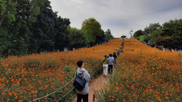 Foto: Pesona Ladang Bunga Olimpic Park, Populer di Korea Selatan (44402)