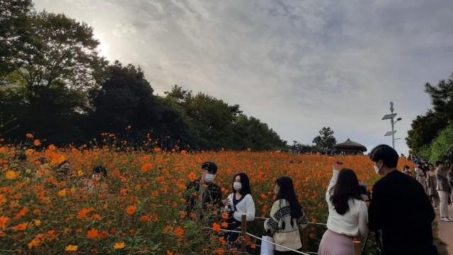 Foto: Pesona Ladang Bunga Olimpic Park, Populer di Korea Selatan (44403)
