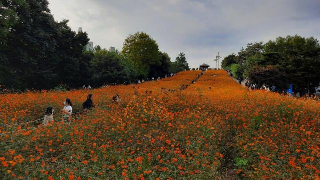 Foto: Pesona Ladang Bunga Olimpic Park, Populer di Korea Selatan (44404)