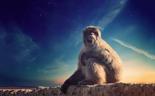 Kisah Pesugihan: Monyet-Monyet Gaib Gandakan Penghasilan Warung Soto (42572)