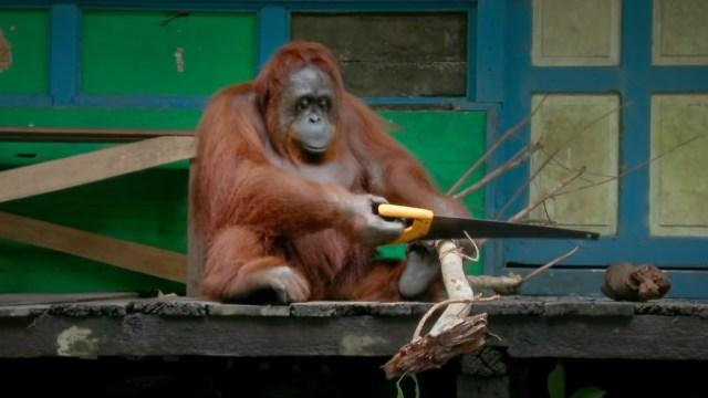 10 Momen Menarik Hewan yang Tertangkap Video (52202)