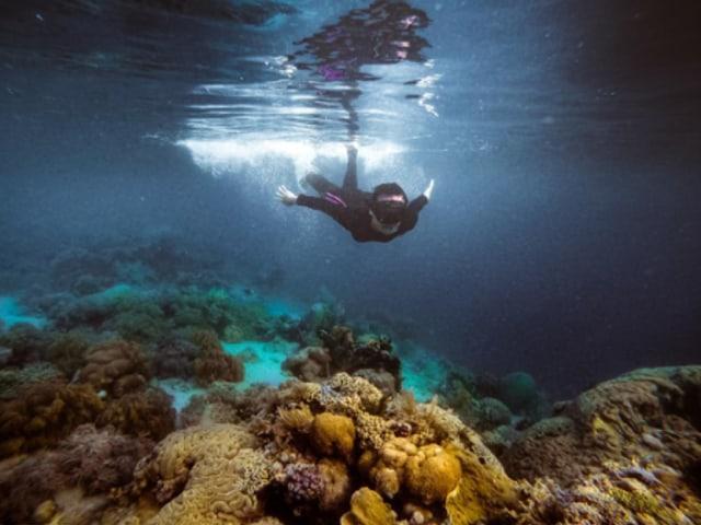 Mau Coba Snorkeling Pertama Kali? Ini 7 Hal yang Harus Kamu Perhatikan (76802)