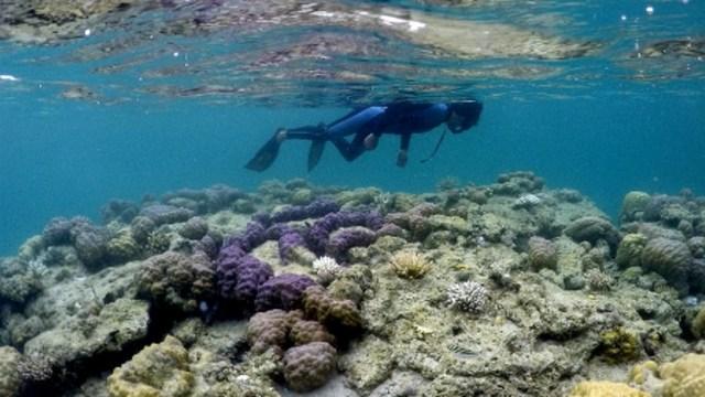 Mau Coba Snorkeling Pertama Kali? Ini 7 Hal yang Harus Kamu Perhatikan (76810)