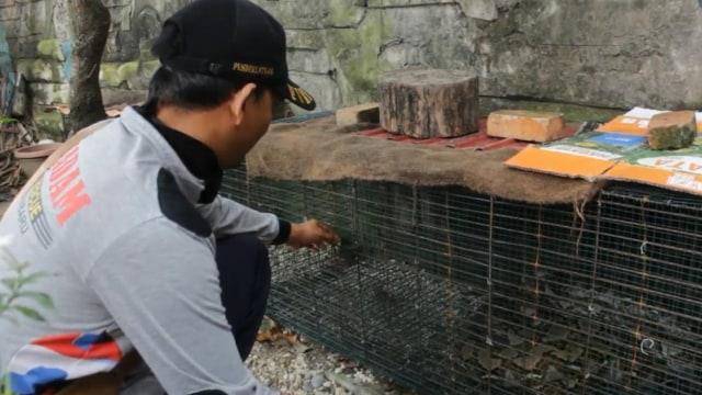 Ular Piton 3,5 Meter Bersarang di Parit Depan Mapolresta Pekanbaru (79353)