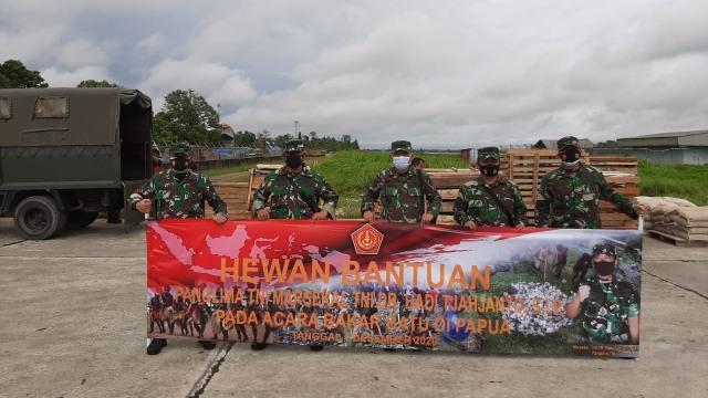 Panglima TNI Kirim 59 Babi Hutan Untuk Perayaan Bakar Batu di Papua (108399)