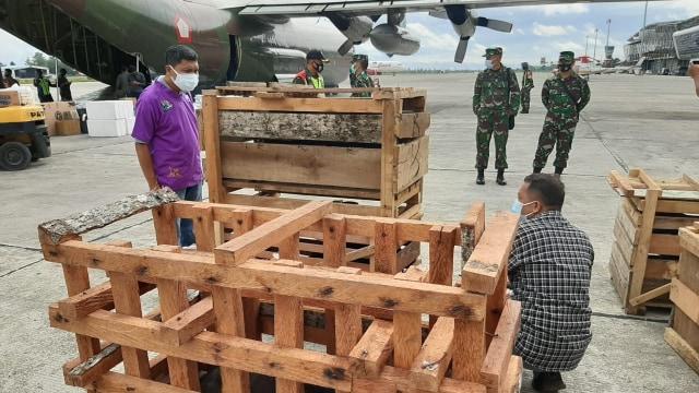 Panglima TNI Kirim 59 Babi Hutan Untuk Perayaan Bakar Batu di Papua (108400)