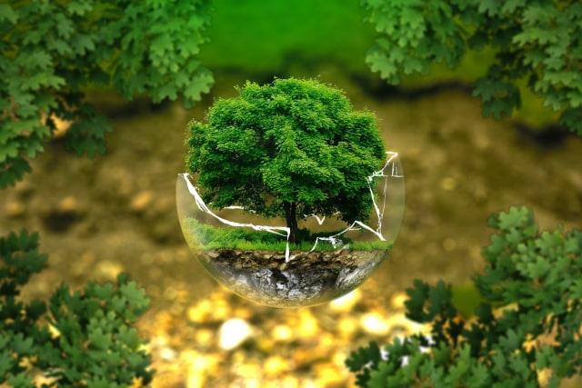 Hari Menanam Pohon Nasional 28 November: Jangan Hanya Jadi Seremonial Tahunan (318857)
